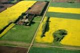 AER SUM SCE  SK     1804204DAERIAL VIEW OF FARM AND SUMMER FIELDSABERDEEN                         07/10© CLARENCE W. NORRIS     ALL RIGHTS RESERVED ABERDEEN;AERIAL;CANOLA;CROPS;FARMING;FIELDS;PLAINS;PRAIRIES;ROADS;RURAL;SASKATCHEWAN;SCENES;SK_;SUMMER LONE PINE PHOTO              (306) 683-0889
