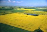 AER SUM SCE  SK     1804312D      AERIAL VIEW OF FARM FIELDS IN SUMMER, CANOLA FIELDSST. DENIS                            07/10© CLARENCE W. NORRIS      ALL RIGHTS RESERVEDAERIAL;CANOLA;CROPS;FARMING;FIELDS;PATTERNS;PLAINS;PRAIRIES;ROADS;SASKATCHEWAN;SCENES;SK_;ST._DENIS;SUMMER  LONE PINE PHOTO              (306) 683-0889
