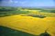 AERIAL VIEW OF FARM FIELDS IN SUMMER, CANOLA FIELDS, ST. DENIS