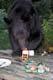 BLACK BEAR RAIDING PICNIC TABLE, MASSEY