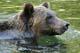 GRIZZLY BEAR, TWEEDSMUIR PROVINCIAL PARK
