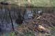 BEAVER DAM AND POND, NISBET PROVINCIAL FOREST