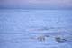 POLAR BEAR AND CUB ON PACK ICE, CAPE CHURCHILL, WAPUSK NATIONAL PARK