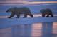 MOTHER POLAR BEAR AND CUB, CAPE CHURCHILL, WAPUSK NATIONAL PARK