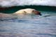 POLAR BEAR SWIMMING IN WATER, ICE FLOE BEHIND, WAGER BAY