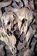 LAYERED BUFFALO SKULLS, HEAD-SMASHED-IN BUFFALO JUMP