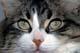 CAT, CLOSE-UP OF FACE, WINNIPEG