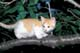 ORANGE AND WHITE TABBY KITTEN ON CHERRY TREE BRANCH, PORT PERRY
