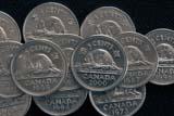 ANI BEA MIS  SK     2011620DBEAVER ON CANADA 5 CENT COINSASKATOON                           12/01© CLARENCE W. NORRIS          ALL RIGHTS RESERVEDANIMALS;BEAVERS;CANADIAN;COINS;CURRENCY;DATES;MONEY;NICKELS;NUMBERS;PLAINS;PRAIRIES;SASKATCHEWAN;SASKATOON;SK_;WINTERLONE PINE PHOTO                 (306) 683-0889