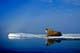 ATLANTIC WALRUS ON ICE FLOE, FOXE BASIN, IGLOOLIK