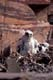 GYRFALCON CHICK AT NEST, CENTRAL BARRENS