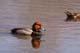 REDHEAD DUCK ON WATER (MALE), SASKATOON