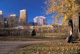 CAL AUT SCE  AB  DSR1000124DCITY OF EDMONTON SKYLINE IN AUTUMNEDMONTON                        10..© DUANE S. RADFORD         ALL RIGHTS RESERVEDAB_;ALBERTA;AUTUMN;BUILDINGS;CAL_AB;CALENDARS;EDMONTON;HIGH_RISES;PARKS;PATHS;SCENES;SKYLINE;SKYSCRAPERS;STRUCTURES;TREES;URBANLONE PINE PHOTO              (306) 683-0889