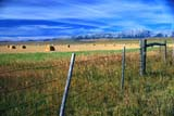 CAL  AUT  SCE  AB  DSR1000369DFENCE, ROUND BALES IN FIELD AND DISTANT MOUNTAINSALBERTA                             09..© DUANE S. RADFORD          ALL RIGHTS RESERVEDAB_;ALBERTA;ALPINE;AUTUMN;BALES;BARBED_WIRE;CAL_AB;CALENDARS;CROPS;FARMING;FENCES;FIELDS;FOOTHILLS;MOUNTAINS;PLAINS;PRAIRIES;ROUND;RURAL;SCENES;SKYLONE PINE PHOTO               (306) 683-0889