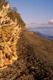 CAL SPR SCE  BC  BRH1901802D  VTDRIFTWOOD ON LONG BEACH IN SPRINGVANCOUVER ISLAND            0511© BLAKE R. HYDE                ALL RIGHTS RESERVEDALPINE;BC_;BEACH;BRITISH;BRITISH_COLUMBIA;CAL_BC;CALENDARS;COLUMBIA;CORDILLERA;DRIFTWOOD;LONG_BEACH;OCEAN;PACIFIC;SCENES;SHORELINE;SPRING;VANCOUVER_ISLAND;VTL;WATER;WEST_COASTLONE PINE PHOTO              (306) 683-0889