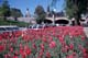 TULIP BEDS, RIDEAU CANAL AND PARLIAMENT BUILDINGS, OTTAWA