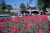 CAL SPR SCE  ON  DSR1000766D   TULIP BEDS, RIDEAU CANAL AND PARLIAMENT BUILDINGSOTTAWA                               05/22© DUANE S. RADFORD             ALL RIGHTS RESERVEDBUILDINGS;CAL_ON;CALENDARS;CAPITAL;CENTRAL;DOMESTIC;FLOWERS;GARDEN;ON_;ONTARIO;OTTAWA;PARLIAMENT;PARLIAMENT_HILL;RIDEAU_CANAL;SCENES;SPRING;STRUCTURES;TREES;TULIPS;URBANLONE PINE PHOTO                  (306) 683-0889