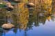 REFLECTIONS IN MCGILLIVRAY LAKE IN AUTUMN, WHITESHELL PROVINCIAL PARK