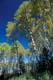 AUTUMN TREES, RIDING MOUNTAIN NATIONAL PARK