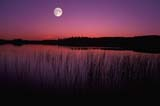 CAL AUT SCE  MB  JLB0002121DMOONRISE OVER SINGUSH LAKEDUCK MOUNTAIN PROV PARK  10..© JOHN L. BYKERK                 ALL RIGHTS RESERVEDAUTUMN;CAL_MB;CALENDARS;COTTAGE;DUCK_MOUNTAIN_PP;LAKES;MANITOBA;MB_;MOON;PLAINS;PLATEAU;PP_;PRAIRIES;REEDS;SCENES;SINGUSH_LAKE;SKY;TWILIGHT;WATERLONE PINE PHOTO                  (306) 683-0889