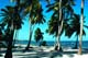 PALM TREES AND BEACH, VICTORIA HOUSE RESORT, BELIZE