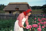 CAL FAR MIS  AB     1614029D  MRUKRAINIAN WOMAN PICKS FLOWER UKRAINIAN CULTURAL VILLAGEEDMONTON                              0819© CLARENCE W. NORRIS           ALL RIGHTS RESERVEDAB_;ADULTS;ALBERTA;BARNS;BUILDINGS;CAL_FARMING;CALENDARS;CULTURE;EDMONTON;FARMING;FEMALE;FLOWERS;GARDENS;MR_;PIONEERS;PRAIRIES;SUMMER;UKRAINIAN;UKRAINIAN_CULTURAL_VILLAGE;WESTERNLONE PINE PHOTO                   (306) 683-0889