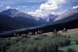 CAL FAR MIS  AB  DSR1000020D  MRTRAIL RIDERS NEAR PANTHER RIVERBANFF NATIONAL PK            08..© DUANE S. RADFORD          ALL RIGHTS RESERVEDAB_;ADVENTURE;ALBERTA;ALPINE;BANFF_NP;CAL_FARMING;CALENDARS;CORDILLERA;HORSES;MOUNTAINS;MR_;NP_;OUTDOORS;PANTHER_RIVER;SUMMER;TRAIL_RIDES;WESTERNLONE PINE PHOTO              (306) 683-0889