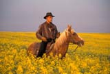 CAL FAR MIS  SK     1610015D  MRMAN RIDING HORSE IN CANOLA FIELDST. DENIS                            0729© CLARENCE W. NORRIS      ALL RIGHTS RESERVEDCAL_FARMING;CALENDARS;CANOLA;COWBOYS;CROPS;FARMING;FIELDS;MALE;MR_;OUTDOORS;PEOPLE;PLAINS;PRAIRIES;RURAL;SASKATCHEWAN;SCENES;SK_;ST._DENIS;SUMMER;WESTERNLONE PINE PHOTO              (306) 683-0889