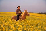 CAL FAR MIS  SK     1610016D  MRMAN RIDING HORSE IN CANOLA FIELDST. DENIS                            0729© CLARENCE W. NORRIS      ALL RIGHTS RESERVEDCAL_FARMING;CALENDARS;CANOLA;COWBOYS;CROPS;FARMING;FIELDS;MALE;MR_;OUTDOORS;PEOPLE;PLAINS;PRAIRIES;RURAL;SASKATCHEWAN;SCENES;SK_;ST._DENIS;SUMMER;WESTERNLONE PINE PHOTO              (306) 683-0889