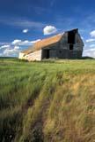 CAL FAR MIS  SK     1703315D  VTBARN IN SUMMER GRASSKERROBERT                             0713© CLARENCE W. NORRIS           ALL RIGHTS RESERVEDBARNS;BUILDINGS;BULLETINS;CAL_FARMING;CALENDARS;FARMING;GRASS;KERROBERT;PLAINS;PRAIRIES;RURAL;SASKATCHEWAN;SCENES;SK_;STRUCTURES;SUMMER;VTLLONE PINE PHOTO                   (306) 683-0889