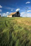 CAL FAR MIS  SK     1703316D  VTBARN & WINDMILL IN SUMMER GRASSKERROBERT                           0713© CLARENCE W. NORRIS         ALL RIGHTS RESERVEDBARNS;BUILDINGS;BULLETINS;CAL_FARMING;CALENDARS;FARMING;GRASS;KERROBERT;PLAINS;PRAIRIES;RURAL;SASKATCHEWAN;SCENES;SK_;STRUCTURES;SUMMER;WINDMILLS;VTLLONE PINE PHOTO                 (306) 683-0889