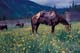 HORSE GRAZING IN CORRAL, CASCADE VALLEY, BANFF NATIONAL PARK