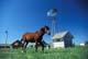 HORSES IN PASTURE AT ABANDONED FARM, VULCAN