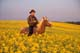MAN RIDING HORSE IN CANOLA FIELD, ST. DENIS