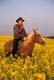 MAN RIDING HORSE IN CANOLA, ST. DENIS