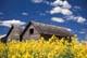 GRANARIES IN CANOLA FIELD, ERWOOD