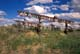 COWBOY BOOTS ON FENCE LINE, GREAT SANDHILLS