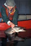 "CAL FIS MIS  SK     1603632D  MR VT  FISHERMAN IN CANOE WITH 33"" NORTHERN PIKEDEVIL LAKELAC LA RONGE PROV PK      0531© CLARENCE W. NORRIS      ALL RIGHTS RESERVEDBOREAL;CAL_FISHING;CALENDARS;CANOEING;FISH;FISHING;JACKFISH;LAC_LA_RONGE_PP;MALE;MR_;NORTHERN_PIKE;OUTDOORS;PEOPLE;PP_;SASKATCHEWAN;SHIELD;SK_;SPORTS;SPRING;VTLLONE PINE PHOTO              (306) 683-0889"