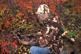 CAL HUN MIS  SK     1617118D  MR#287-288MAN IN CAMOUFLAGECROSSBOW IN FALL BUSHLANGHAM                            0921© CLARENCE W. NORRIS      ALL RIGHTS RESERVEDACTIVITIES;ADULTS;ARCHERY;ARROWS;AUTUMN;BUSHES;CAL_HUNTING;CALENDARS;CAMOUFLAGE;CROSSBOWS;FOREST;HUNTING;LANGHAM;MALE;MICHAEL;MR_;OUTDOORS;PEOPLE;SASKATCHEWAN;SCENES;SK_;WEAPONSLONE PINE PHOTO              (306) 683-0889