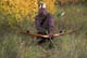 MAN IN CAMOUFLAGE WITH RECURVE BOW IN FALL, LANGHAM