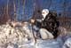 RECURVE BOW HUNTER IN WINTER BRUSH AND SNOW, SASKATOON