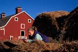 CAL PEO SPR  SK     1902005D  MR GIRL READING ON ROUND BALES RED BARN BEHINDVANSCOY                           04/11© CLARENCE W. NORRIS      ALL RIGHTS RESERVEDBALES;BARNS;BUILDINGS;CAL_PEOPLE;CALENDARS;FARMING;FEMALE;JENNIE;MR_;OUTDOORS;PEOPLE;PLAINS;PRAIRIES;READING;RURAL;SASKATCHEWAN;SCENES;SK_;SPRING;STRUCTURES;TEENS;VANSCOY;YOUTHLONE PINE PHOTO              (306) 683-0889