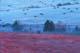 BLUEBERRY FIELDS & HAY FIELD IN EARLY LIGHT, KINGSTON PENINSULA