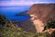 SEA CLIFFS & FLOWERS, SOUTHERN HEAD, GRAND MANAN ISLAND