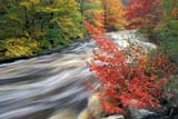 CAL AUT SCE  NS  CRS0000248D     RUNNING WATER AND FALL COLOURSWEST BRANCH BEAR RIVER  10/..© CLIFF SANDESON              ALL RIGHTS RESERVEDATLANTIC;AUTUMN;BEAR_RIVER;CAL_NS;CALENDARS;EAST_COAST;MARITIMES;MOTION;NOVA;NOVA_SCOTIA;NS_;RIVERS;SCENES;SCOTIA;TREES;WATER;WATERFALLS;WEST_BRANCH_BEAR_RIVERLONE PINE PHOTO             (306) 683-0889