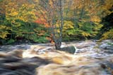 CAL AUT SCE  NS  CRS0000251D     RUNNING WATER AND FALL COLOURSWEST BRANCH BEAR RIVER  10/..© CLIFF SANDESON              ALL RIGHTS RESERVEDATLANTIC;AUTUMN;BEAR_RIVER;CAL_NS;CALENDARS;EAST_COAST;MARITIMES;MOTION;NOVA;NOVA_SCOTIA;NS_;RIVERS;SCENES;SCOTIA;TREES;WATER;WATERFALLS;WEST_BRANCH_BEAR_RIVERLONE PINE PHOTO             (306) 683-0889