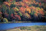 CAL AUT SCE  NS  CRS0000228D     FALL COLOURS, EDEN LAKEPICTOU COUNTY                10/..© CLIFF SANDESON            ALL RIGHTS RESERVEDATLANTIC;AUTUMN;CAL_NS;CALENDARS;EAST_COAST;EDEN_LAKE;FOREST;LAKES;MARITIMES;NOVA;NOVA_SCOTIA;NS_;PICTOU_COUNTY;SCENES;SCOTIA;TREES;WATERLONE PINE PHOTO             (306) 683-0889