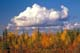 CLOUD OVER FALL COLOURED TREES, DEMPSTER HIGHWAY