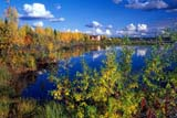 CAL AUT SCE  NT  KJM0217408DFALL COLOURS AT SHELL LAKEINUVIK                                 08..© KEVIN MORRIS                 ALL RIGHTS RESERVEDARCTIC;AUTUMN;CAL_NT;CALENDARS;FOREST;INUVIK;LAKES;NORTHWEST;NORTHWEST_TERRITORIES;NT_;NWT;SCENES;SHELL_LAKE;SHORELINE;TERRITORIES;TREES;WATERLONE PINE PHOTO              (306) 683-0889