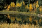 CAL AUT SCE  SK     1115430ADFALL SHORELINE AND REFLECTIONSWASKESIU RIVERPRINCE ALBERT NAT. PK       09/30© CLARENCE W. NORRIS      ALL RIGHTS RESERVEDAUTUMN;BOREAL;CAL_SK;CALENDARS;NP_;PARKLAND;PRINCE_ALBERT_NP;REFLECTIONS;RIVERS;SASKATCHEWAN;SK_;WASKESIU_RIVER;WATER LONE PINE PHOTO              (306) 683-0889